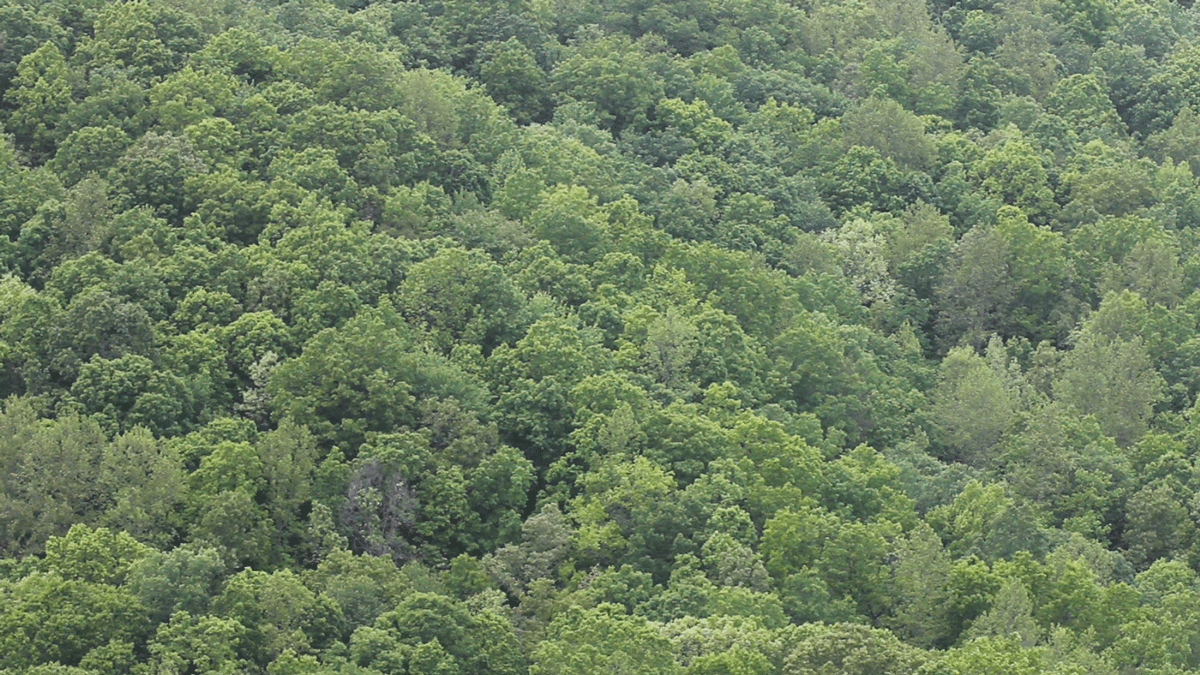Box-Creek-forest.png