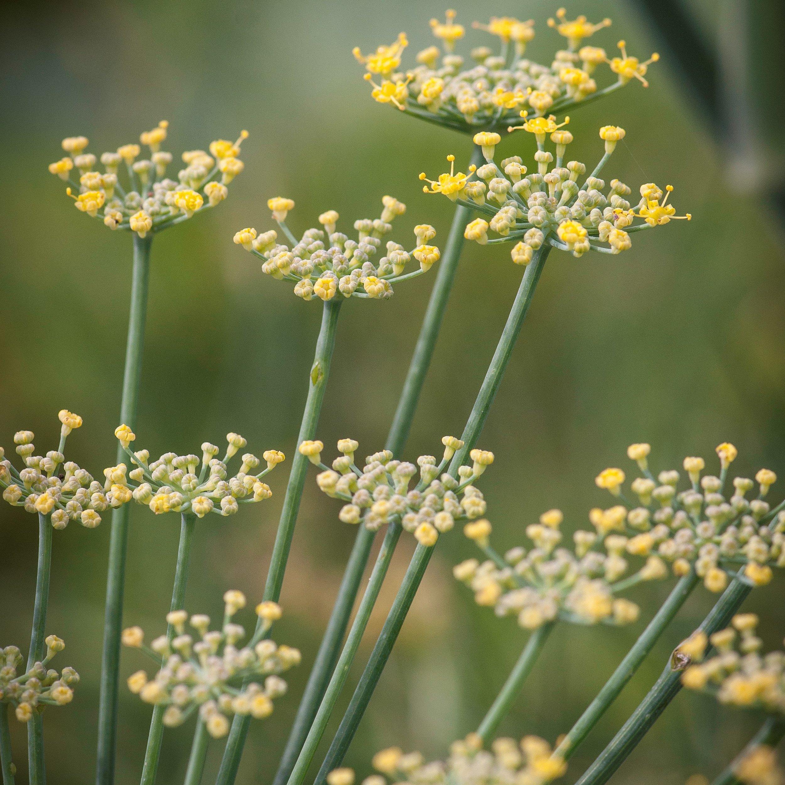 Ecological - garden ethic