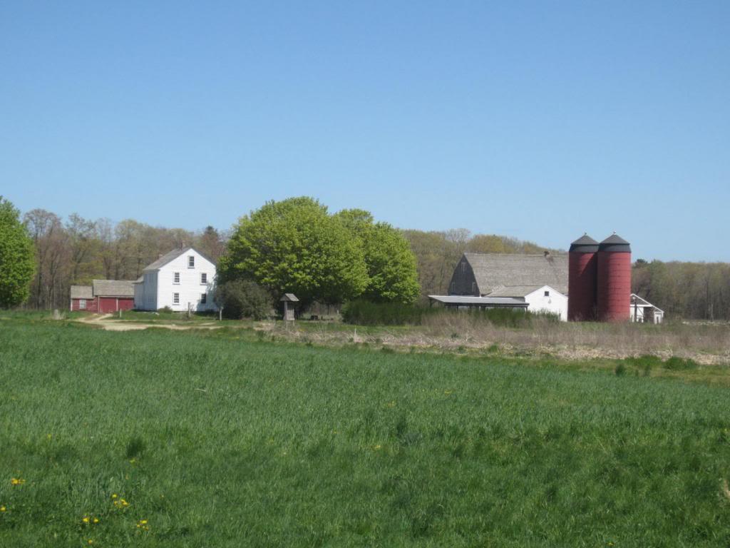 dame farm summer.jpg