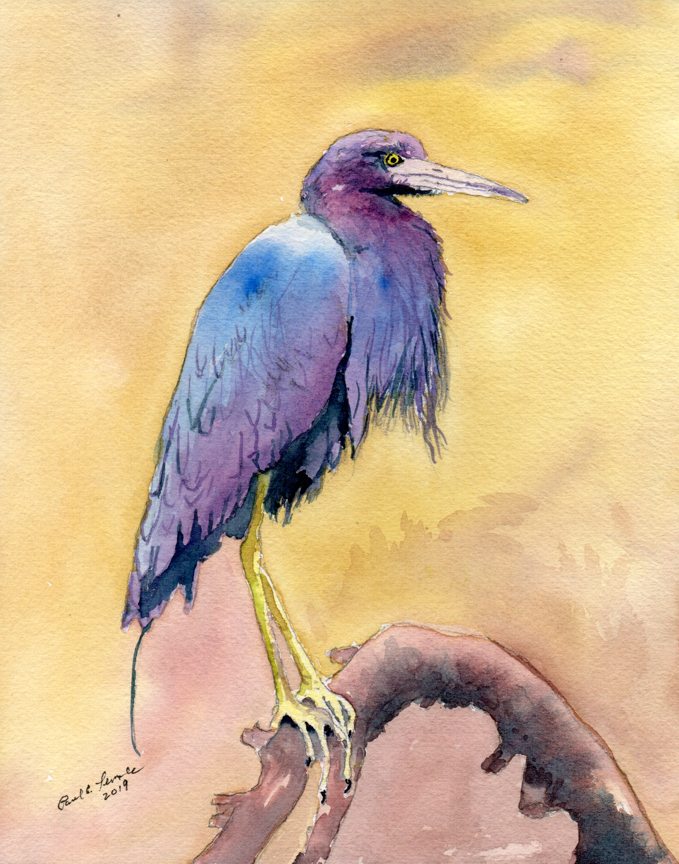 Little Blue Heron III