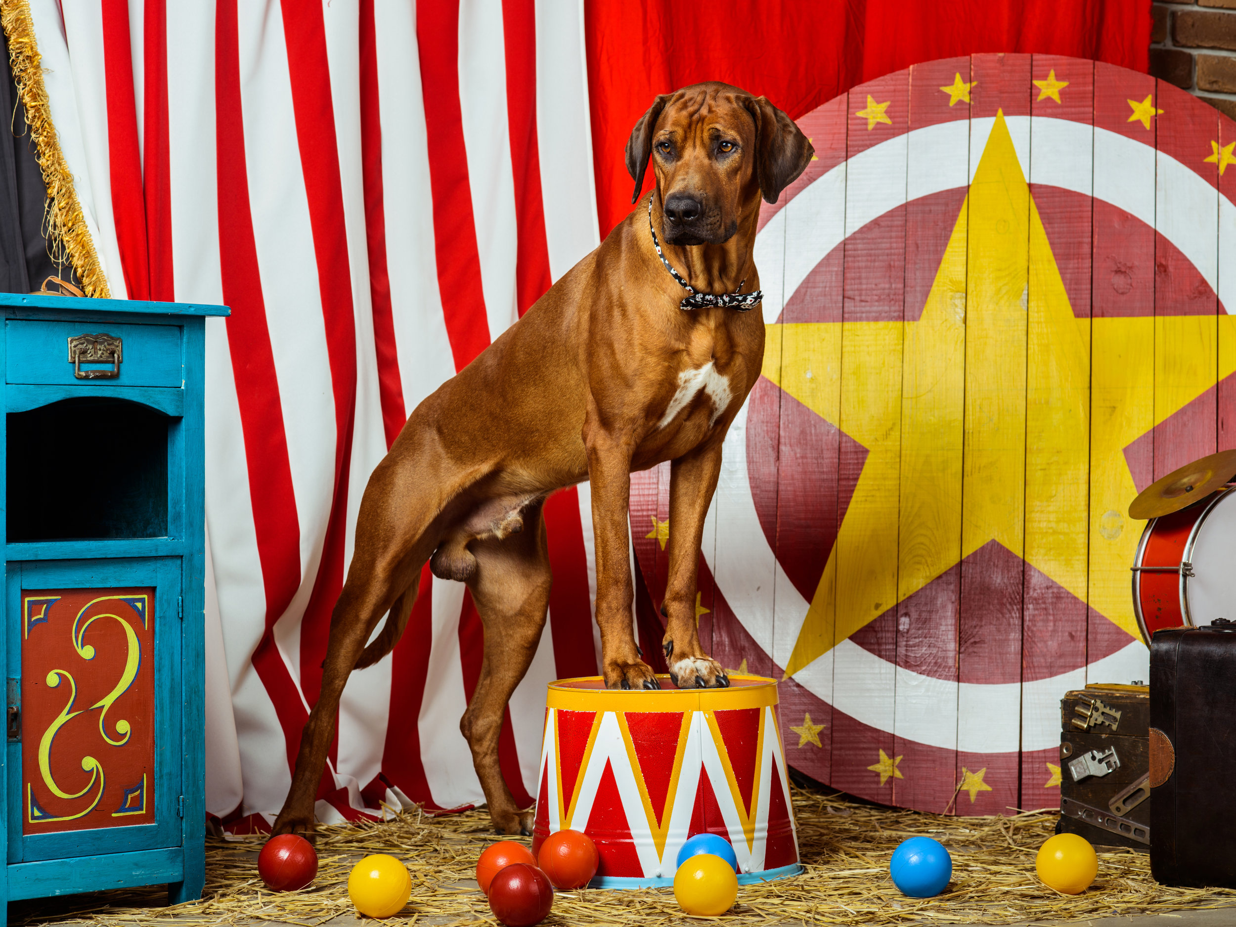 Circus Dog.jpg
