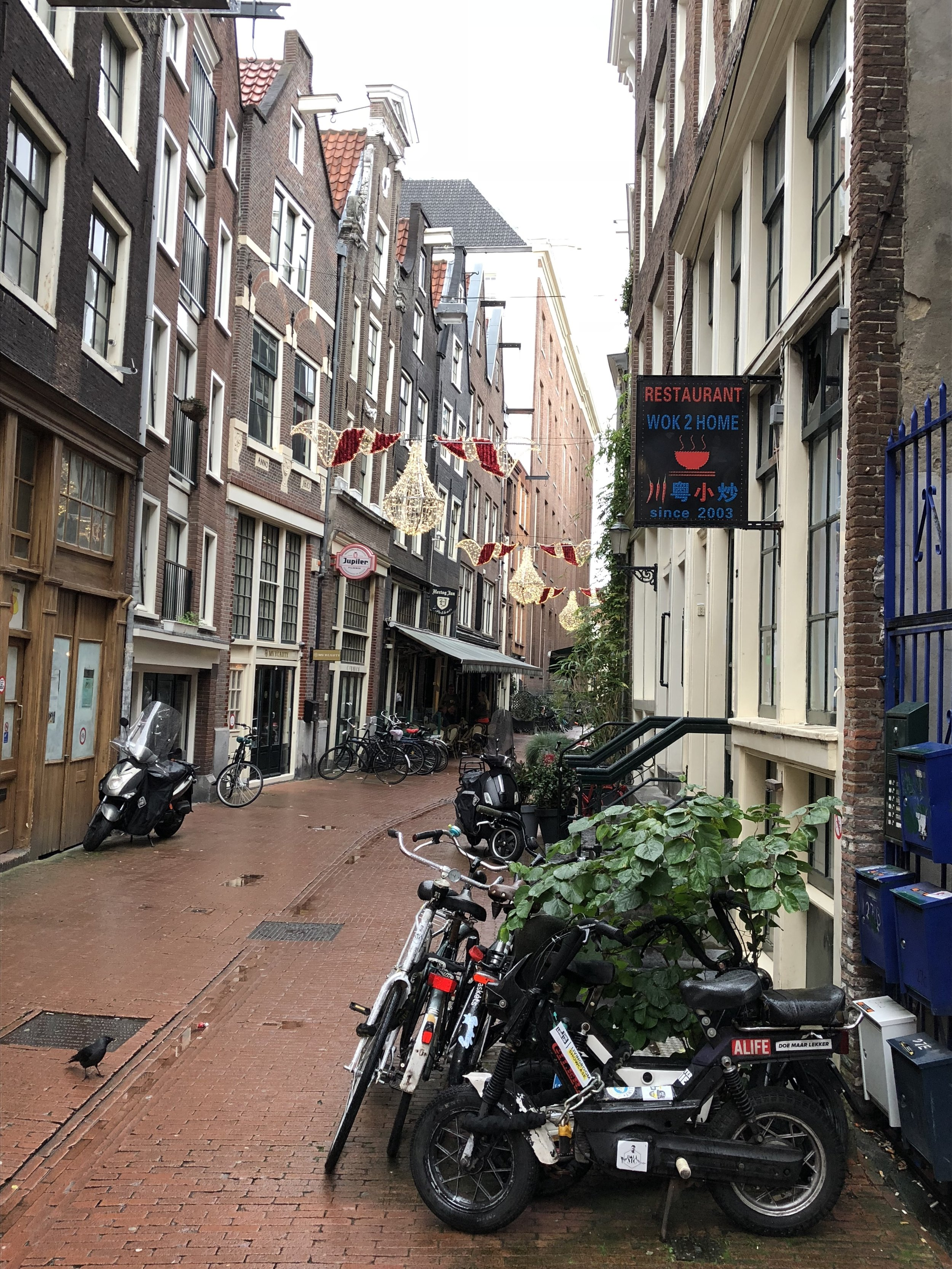 Amsterdam Alley - The Kissters