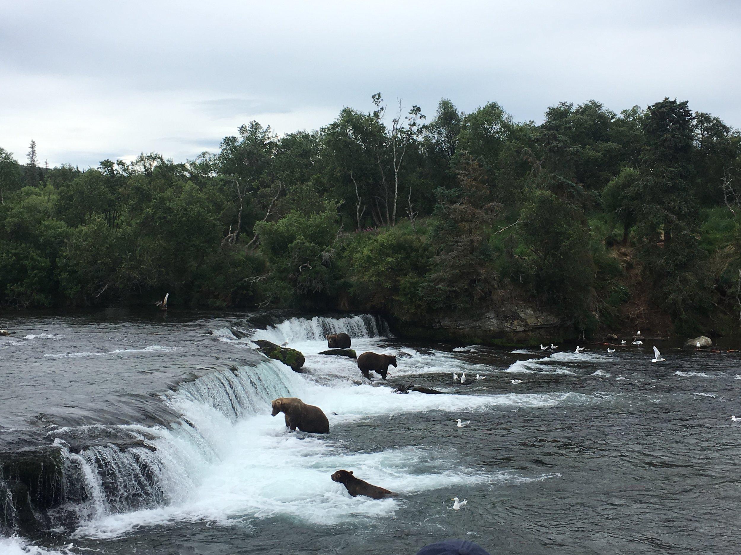 Katmai National Park Bear Watching - The Kissters