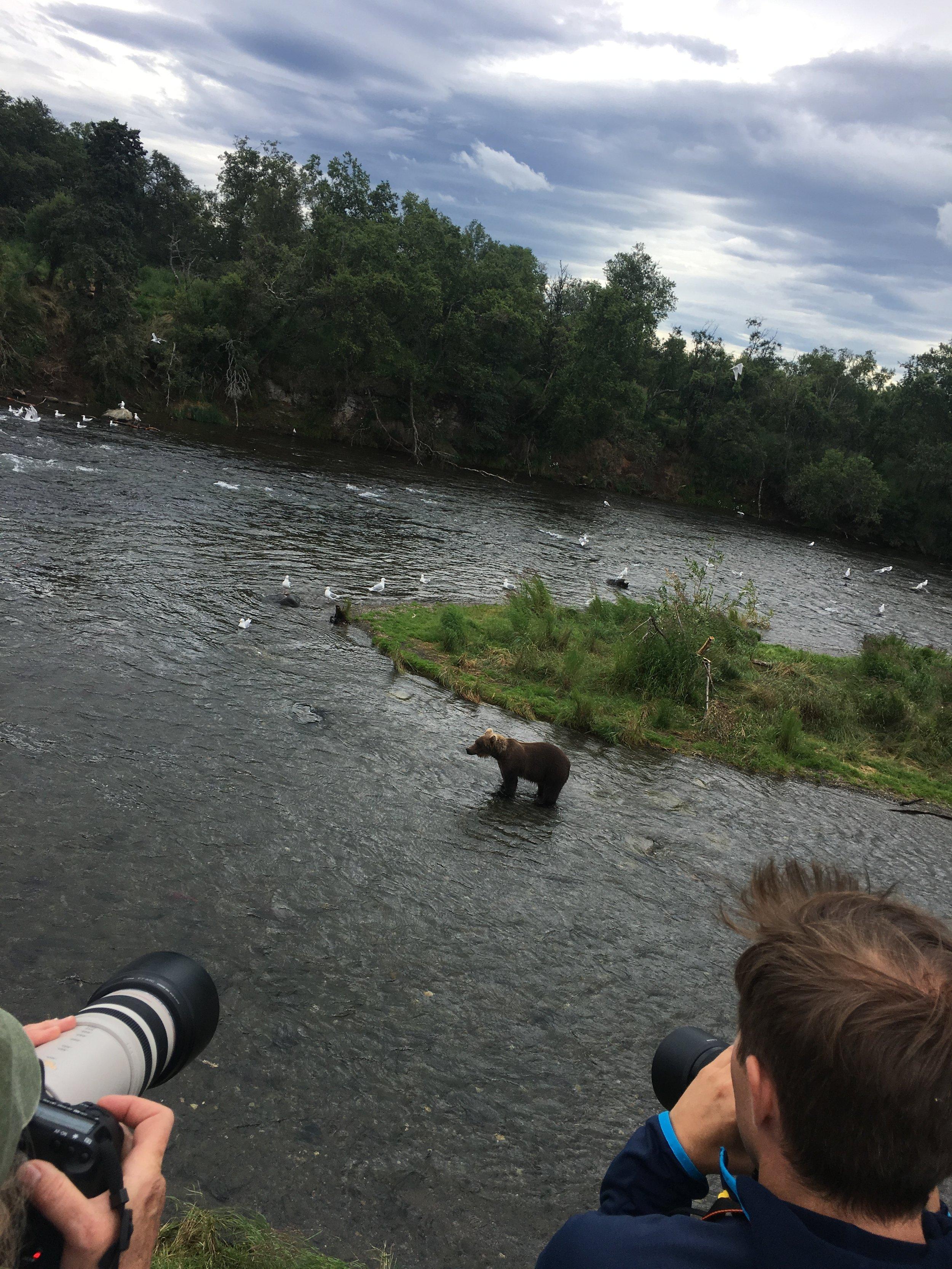 Brooks River Falls Bears - The Kissters