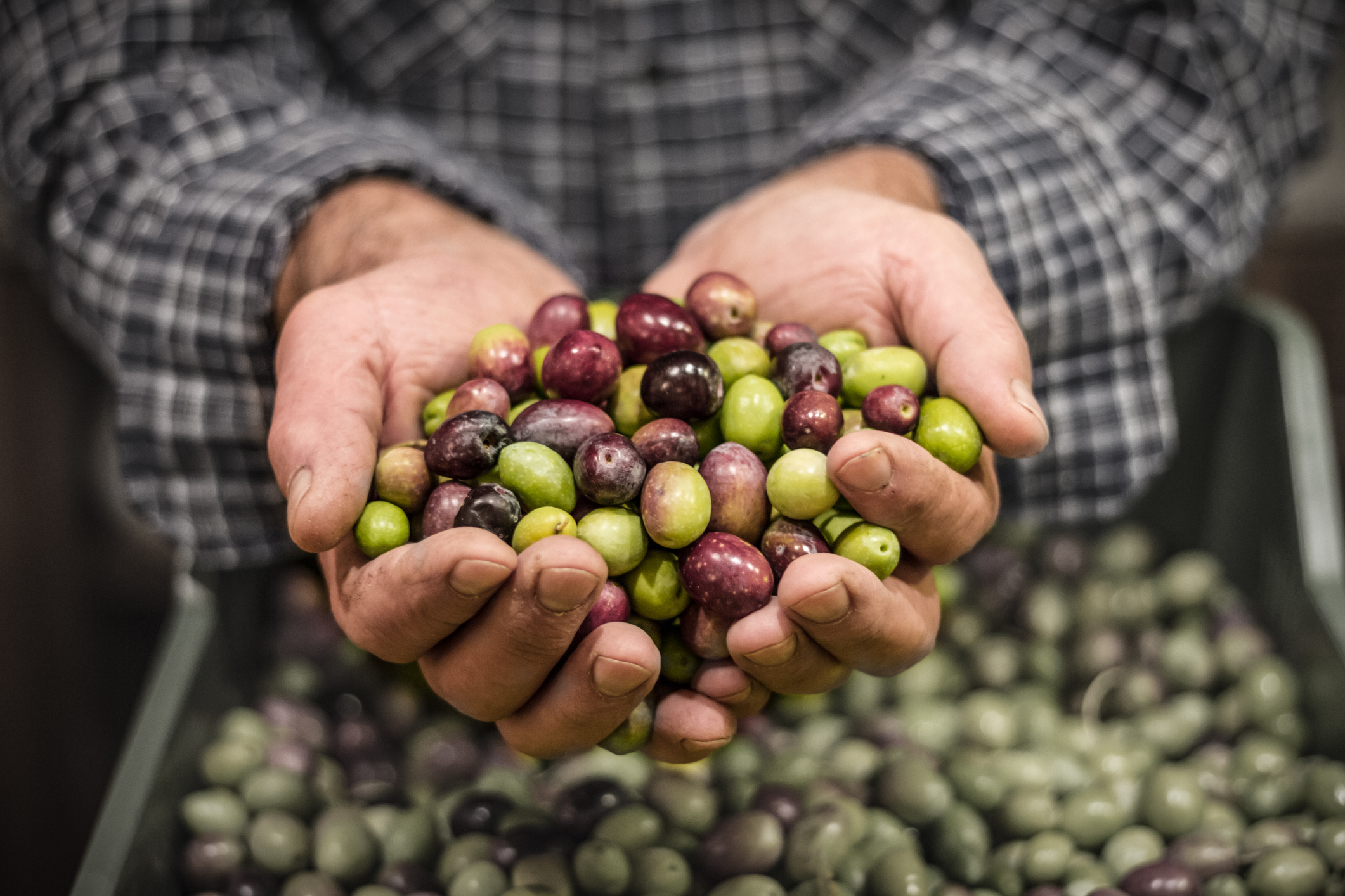 Our family prides itself on a tradition carried on from generation to generation: a careful process of making rich extra virgin olive oil from homegrown olives. You will receive a firsthand a view of this process while enjoying and understanding olive oil production during your week's tour. -