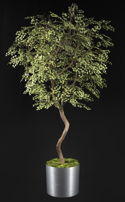 79MHL-BC16-MM TREE MASTERS.JPG