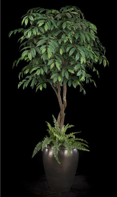 T4138-43EB-1B TREE MASTERS 7' Mango.JPG
