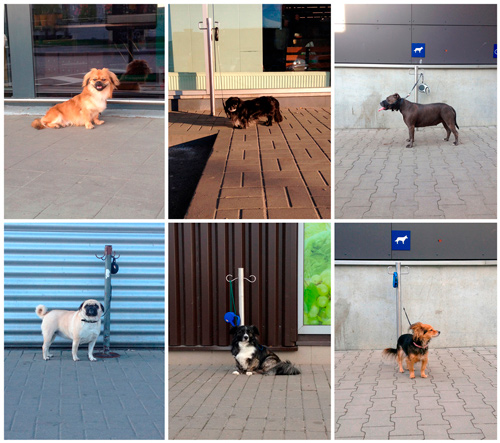 Wait Here   It all started like a hobby: for the last three years, passing by different shops, I photographed dogs, who were left to wait for their masters. 100 pictures. 10 collages for the better overview, 10 dogs on each... more