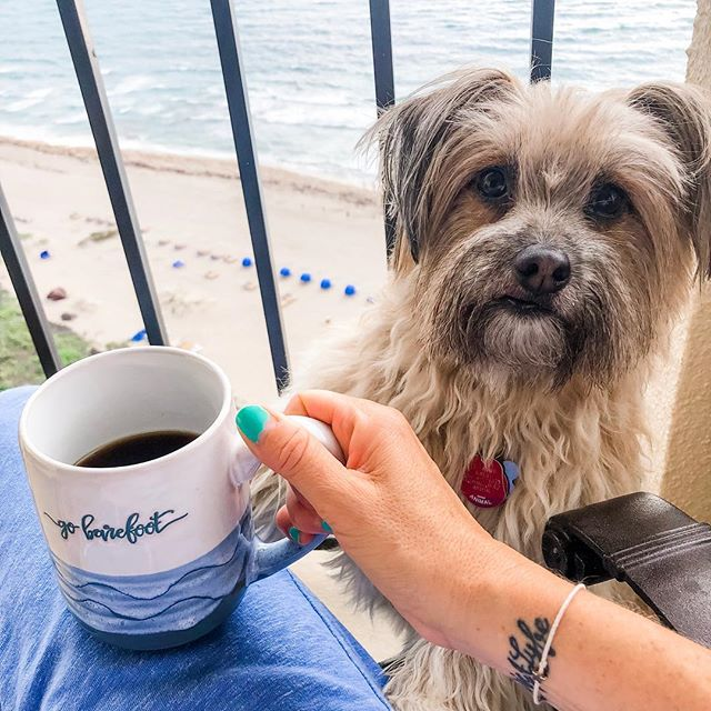 Good morning from our happy place. #saltylife #furbabylove #coffeeaddict