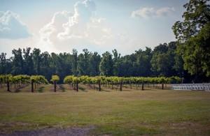 Wills Creek Winery, Duck Springs, Alabama