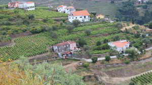 Vineyard view as seen from the Hotel Douro Scala, near Peso du Regua, courtesy Worldwine Marketing