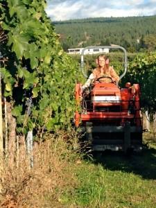 serendipity winery judy kingston