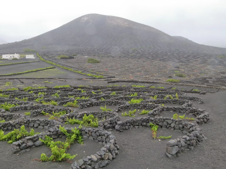 Vineyard on Canary Islands, via Wikipedia/Creative Commons