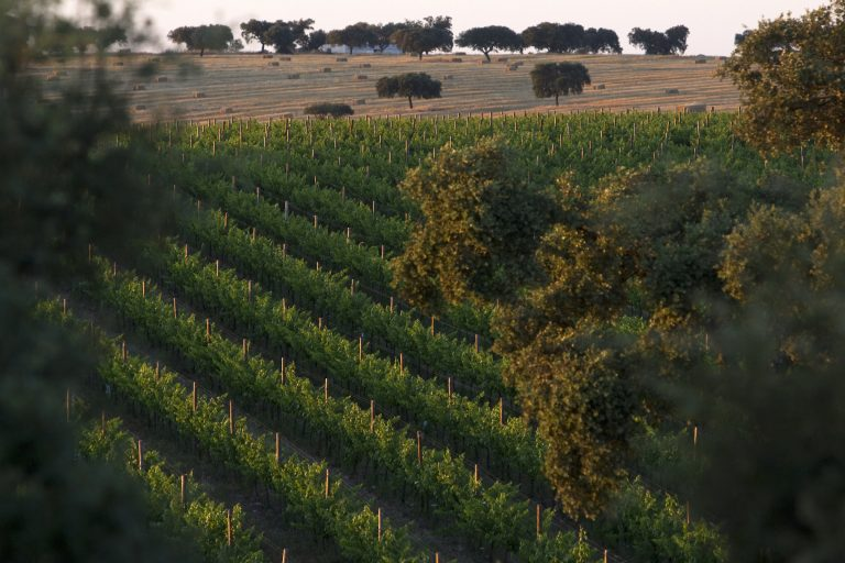 vineyard on one of Esporão's properties in Portugal