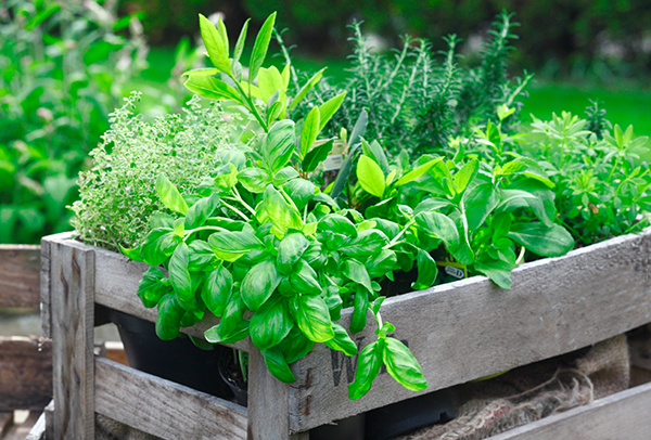 Use fresh herbs for cooking AND spring cocktails!