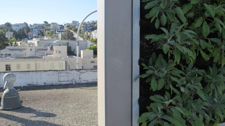 Peeking around the botanicals at the view of Potrero Hill