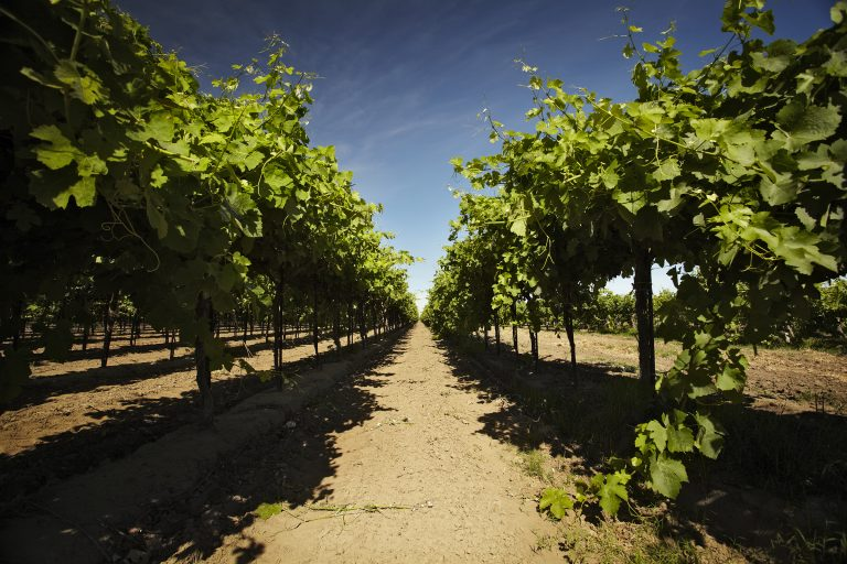 spring-vines