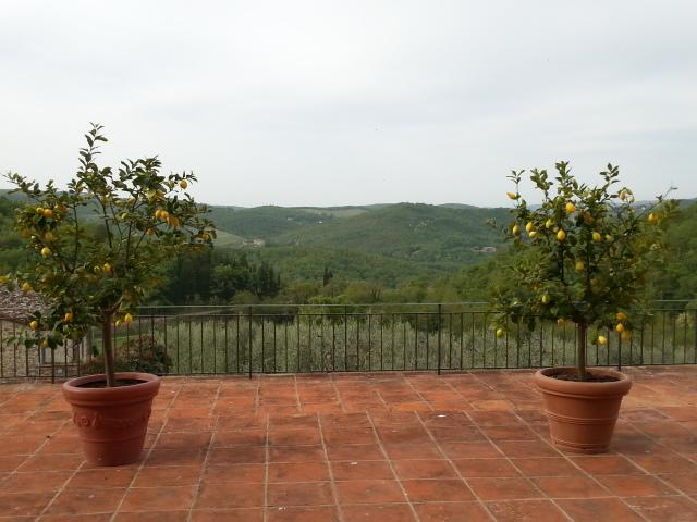staring at the lemon trees Robin Goldsmith