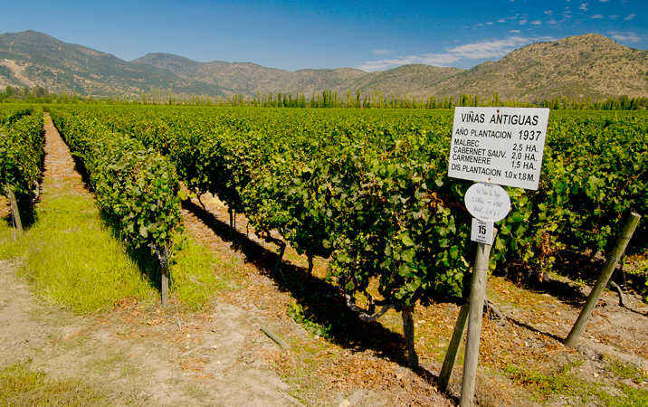 Maule Valley, ctsy Wines of Chile