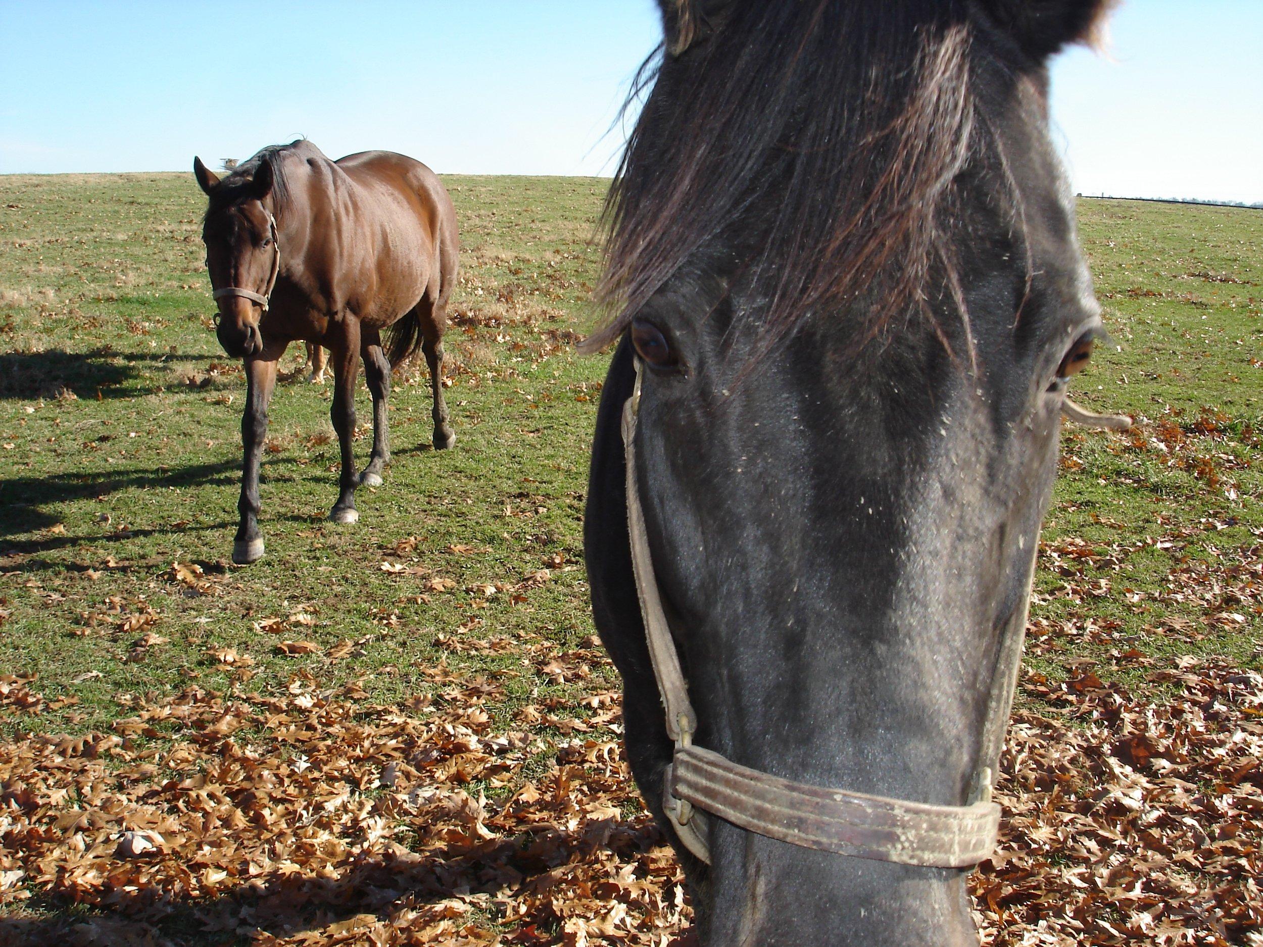 KEN Woodford-Reserve-Horses1.jpg