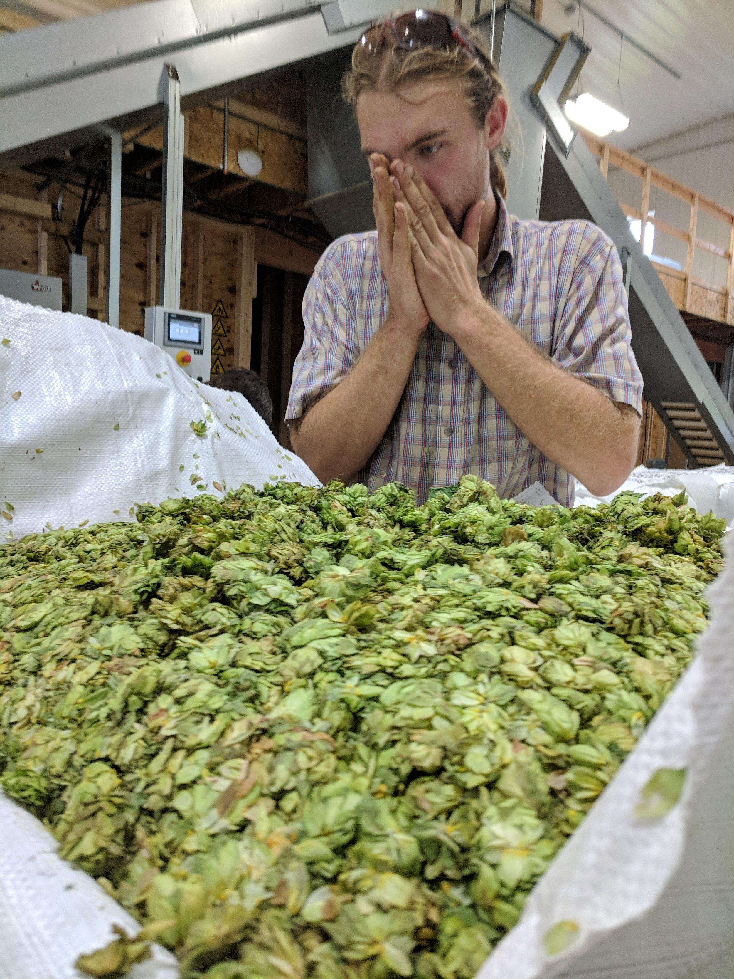 Matt Gura of Hop Head Farms sniffs the hops for quality