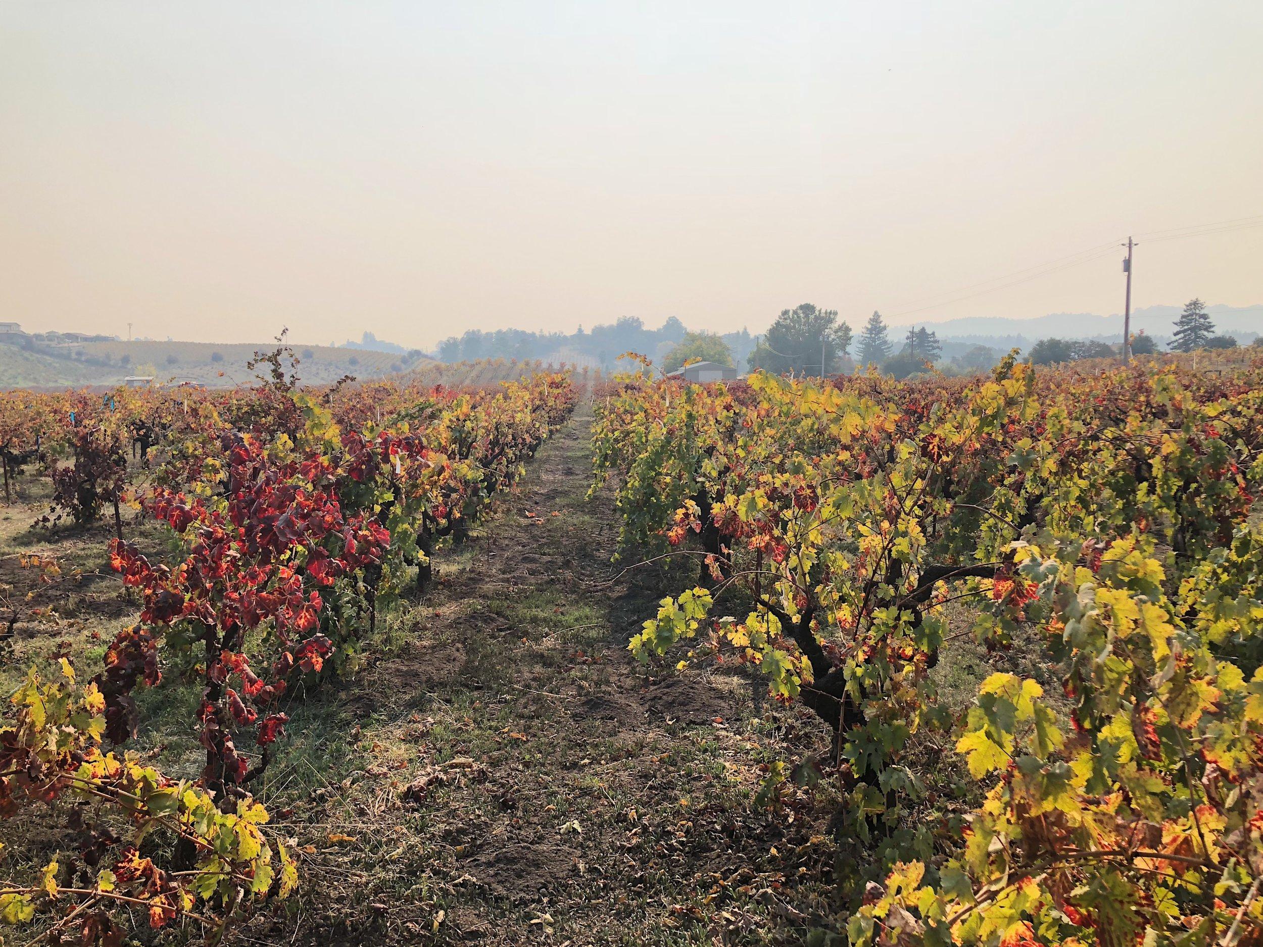 ridge vineyard.jpeg