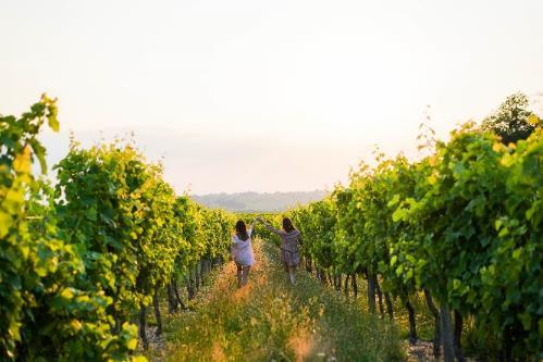 Bordeaux is aiming for 100% sustainability, photo courtesy Vins de Bordeaux