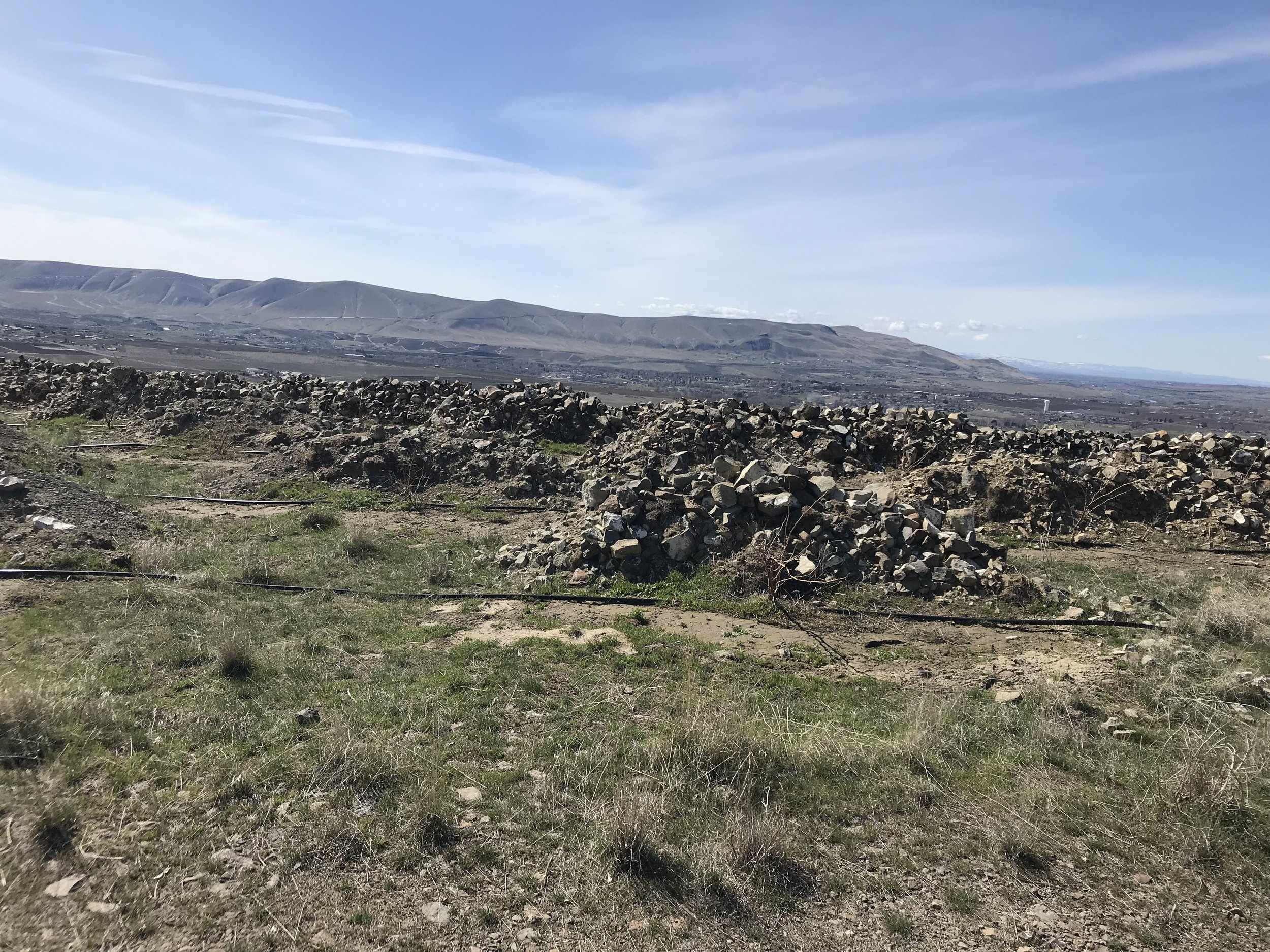 stones protecting mourvedre vines from the elements at WeatherEye