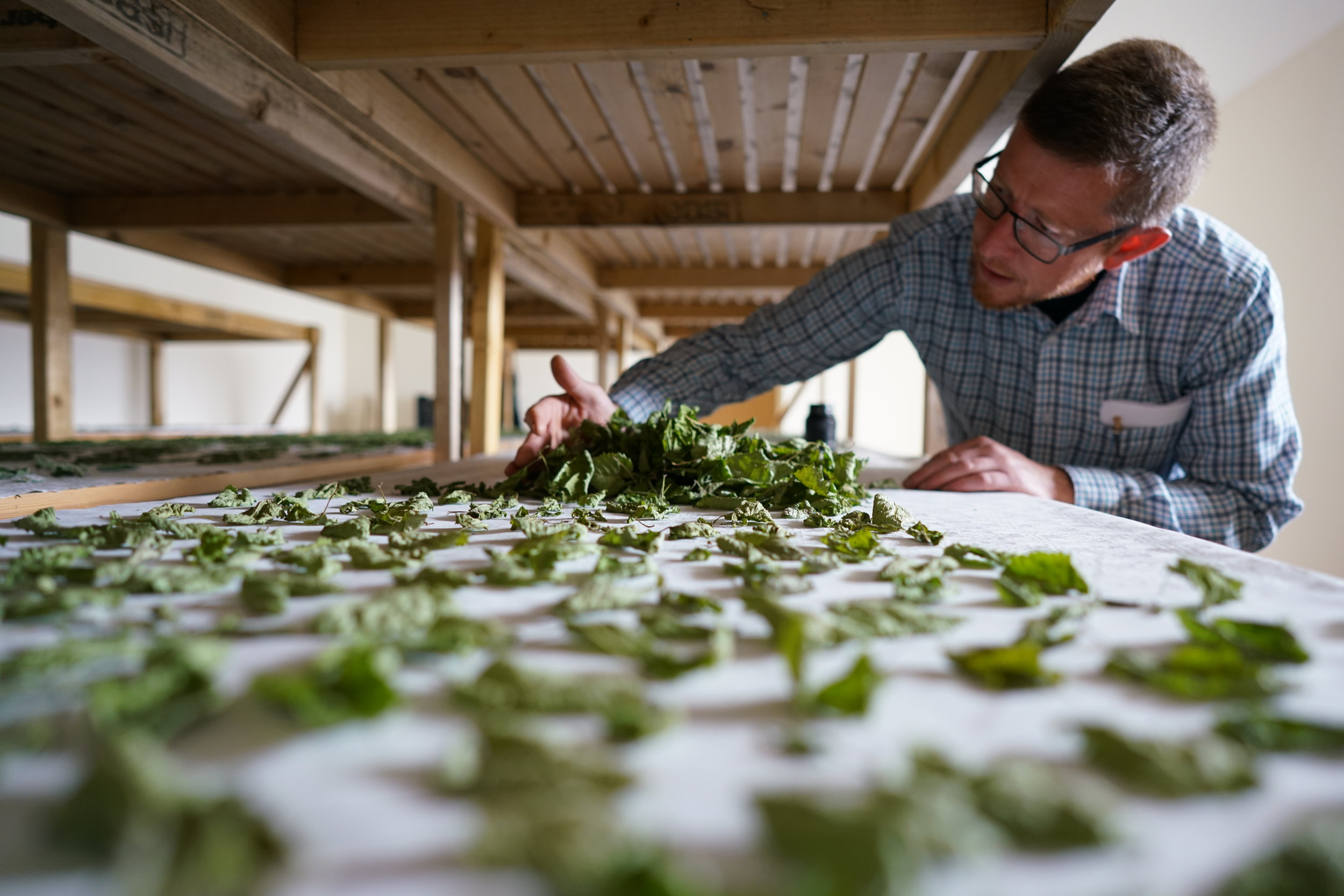 James Donaldson laying out foraged botanicals to dry, courtesy The Botanist