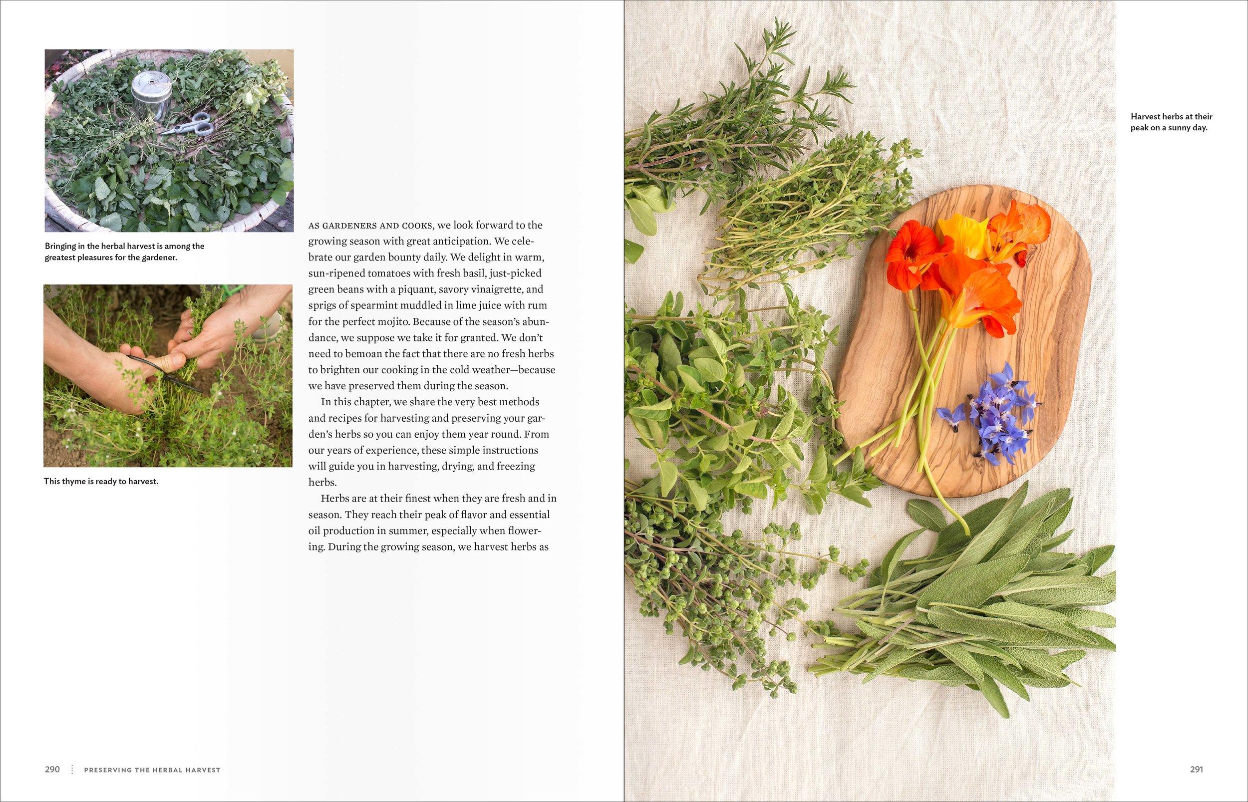 Belsinger_CulinaryHerbal_spreads_Preserving2.jpg