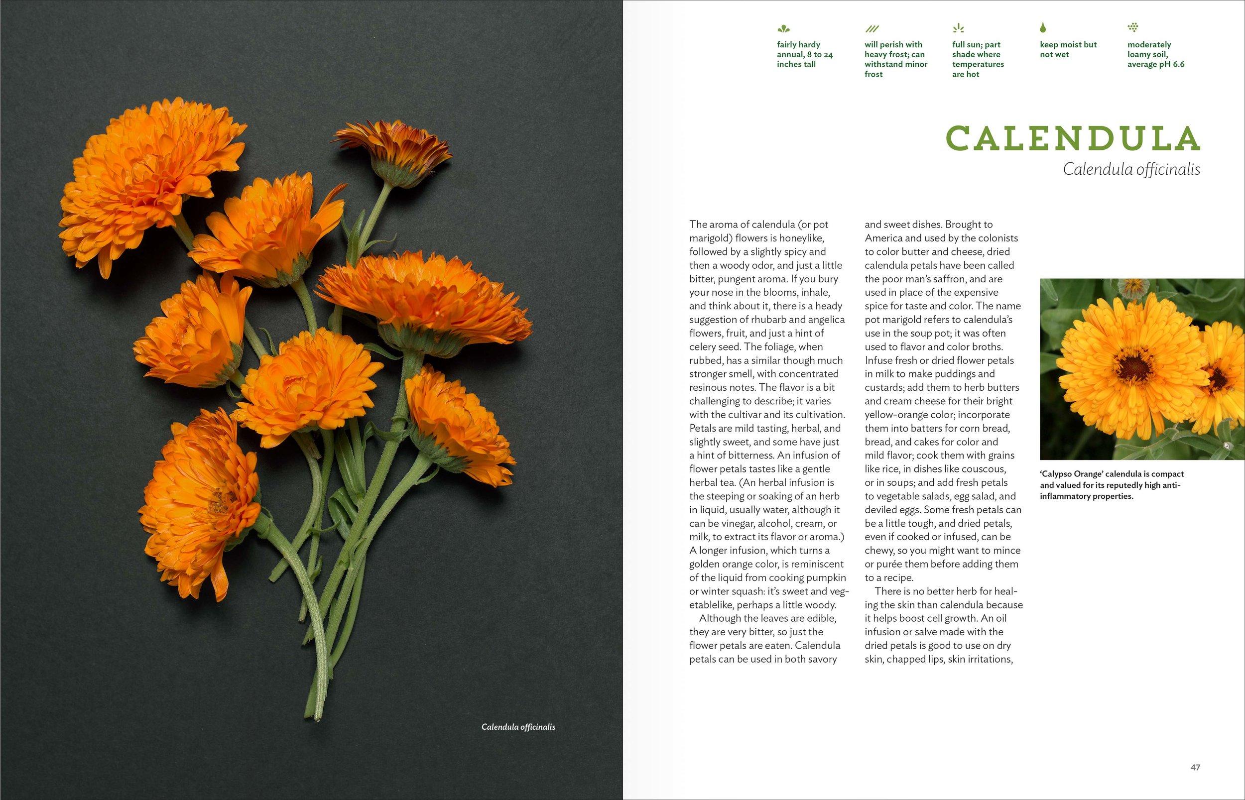 Belsinger_spreads_Calendula.jpg