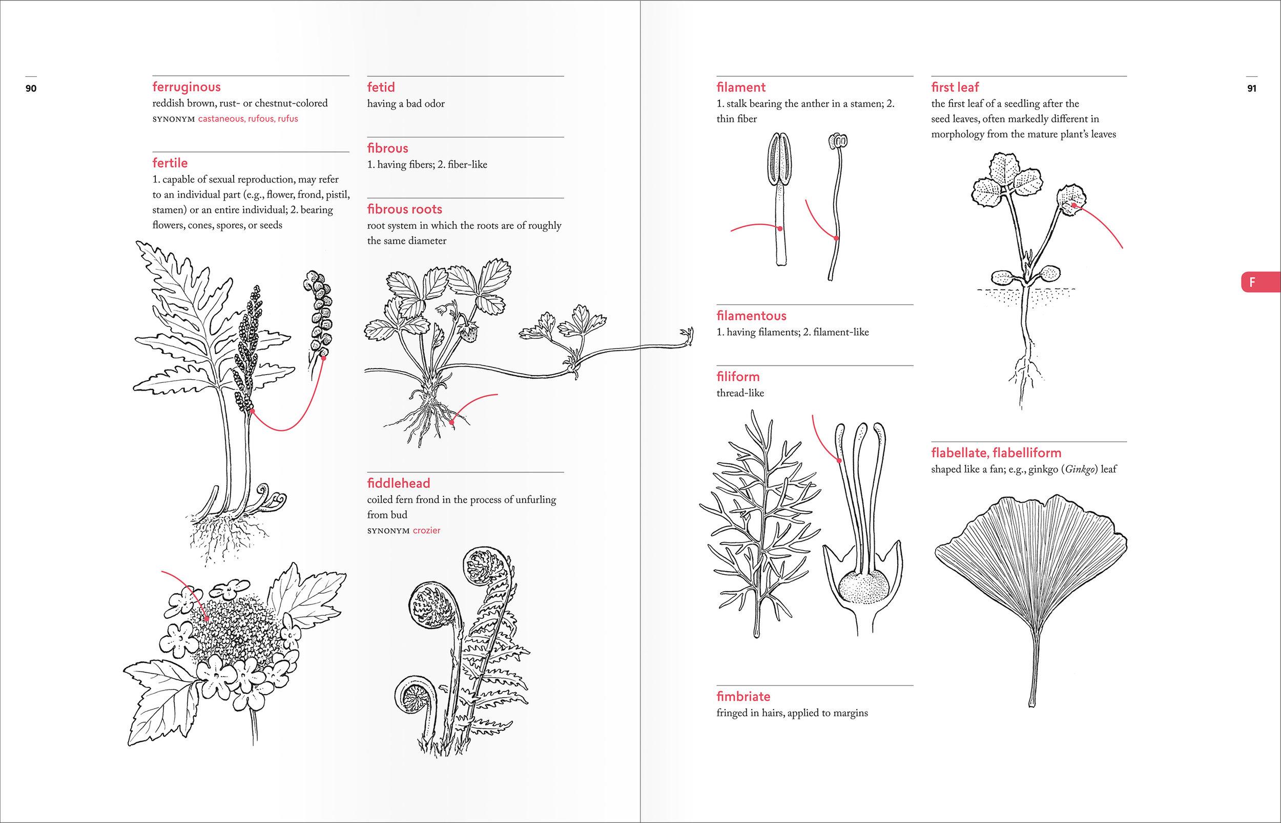 PellAngell_BotanistsVocab_finalpages_spreads_F.jpg
