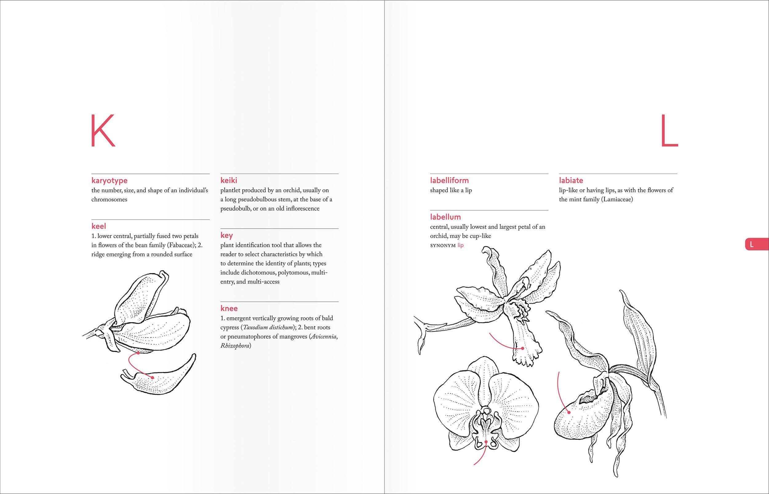 PellAngell_BotanistsVocab_finalpages_spreads_K-L.jpg