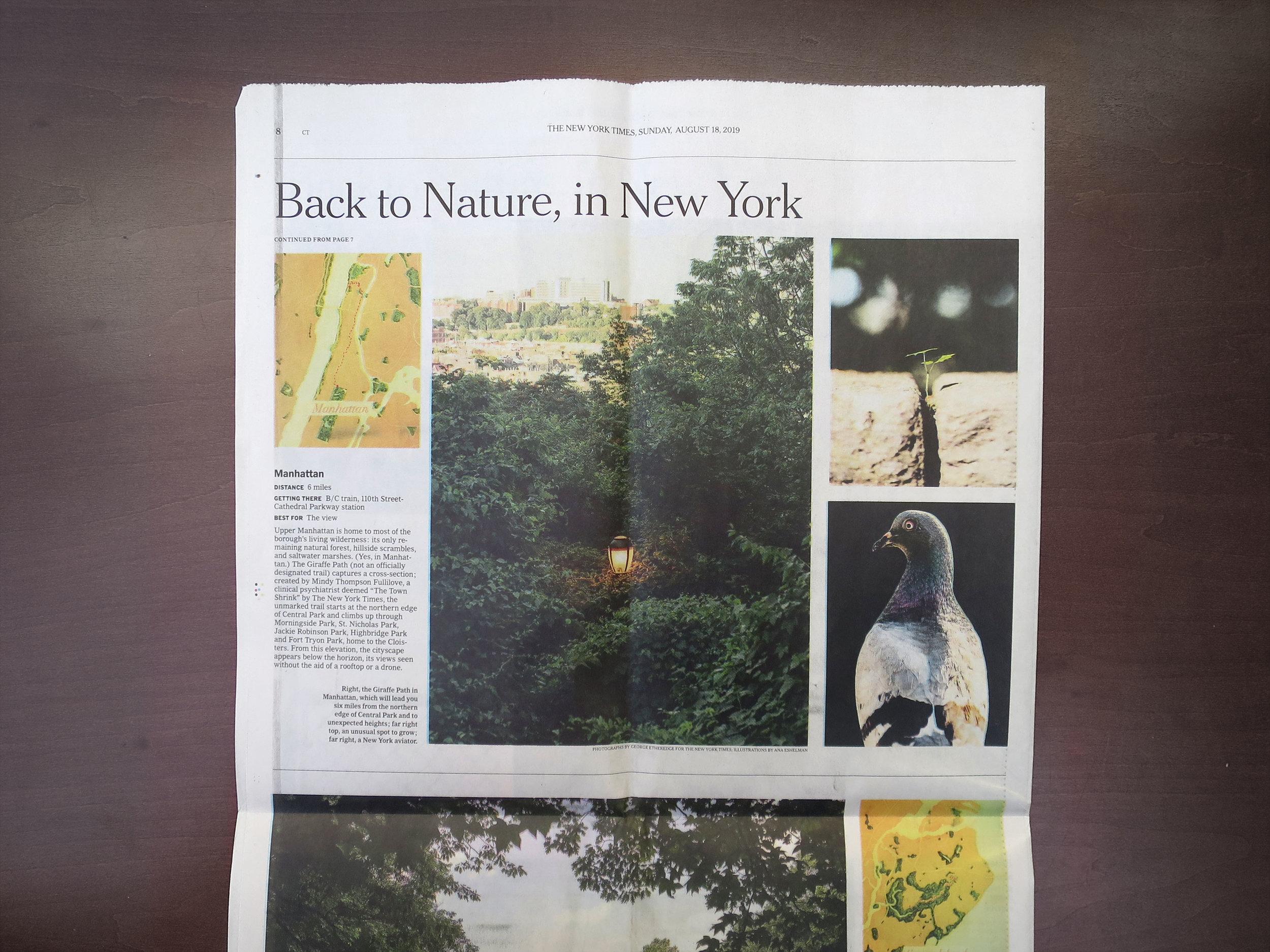 NYT_IMG_8109.jpg