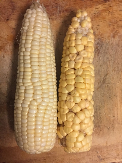 Look at these two cobs... one is not like the other! Although they both tasted pretty gooooood.