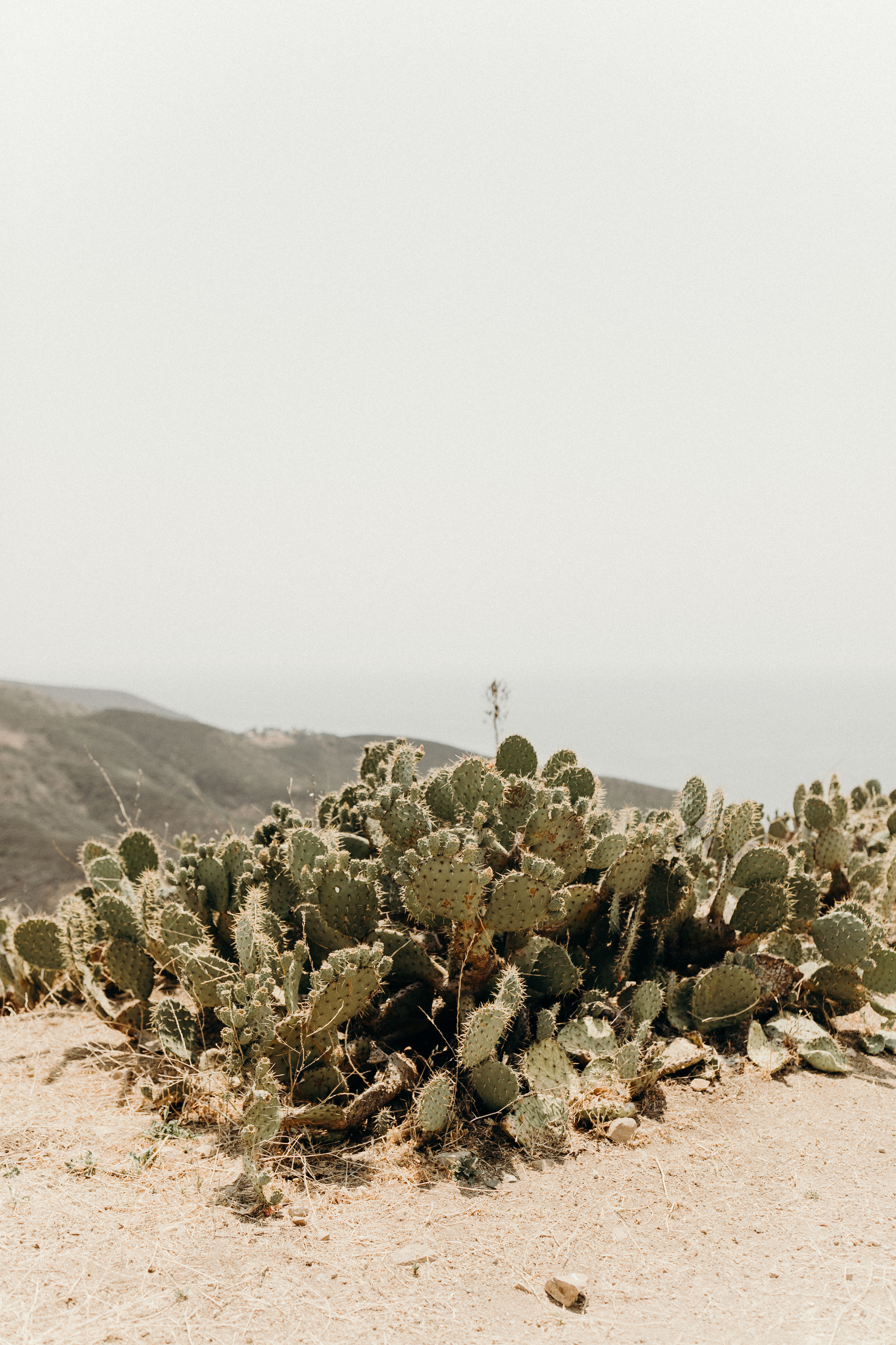 B + M in Malibu California - Victoria Bonvicini Photography-38.jpg