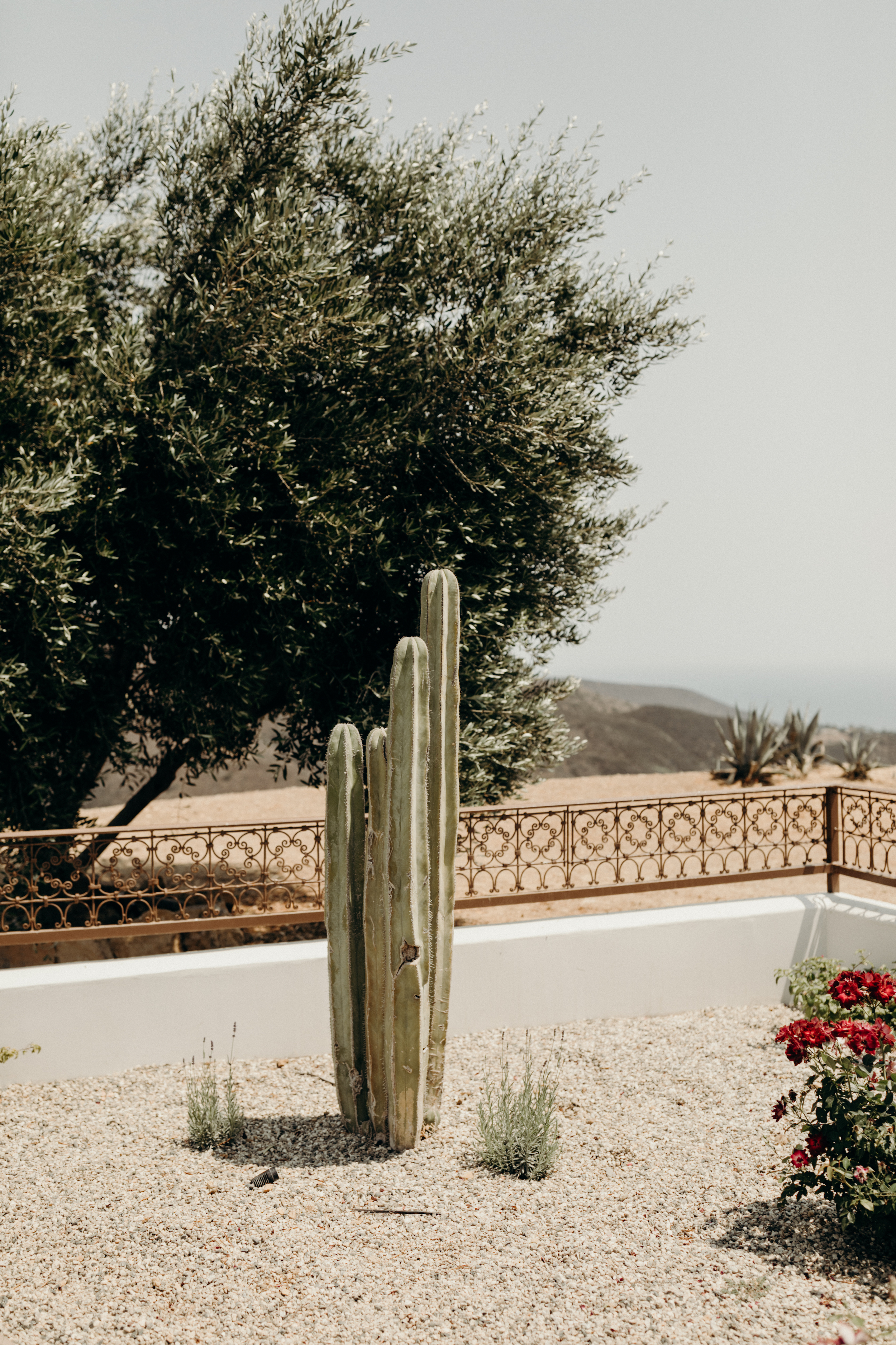 B + M in Malibu California - Victoria Bonvicini Photography-112.jpg