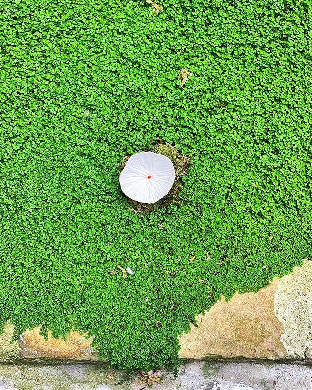 #art #sculpture #unlikelyplaces #flower #grass #green #etudes #paris #france #photography