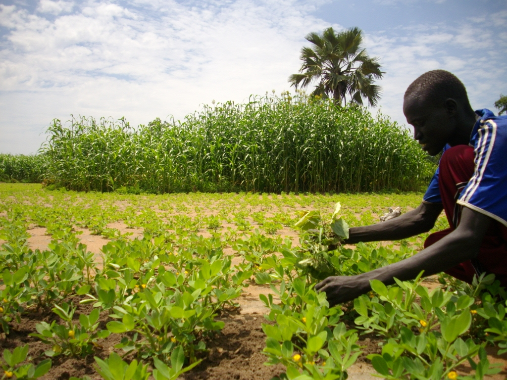 Small-scale_farmers_increase_production_(7536268172).jpg