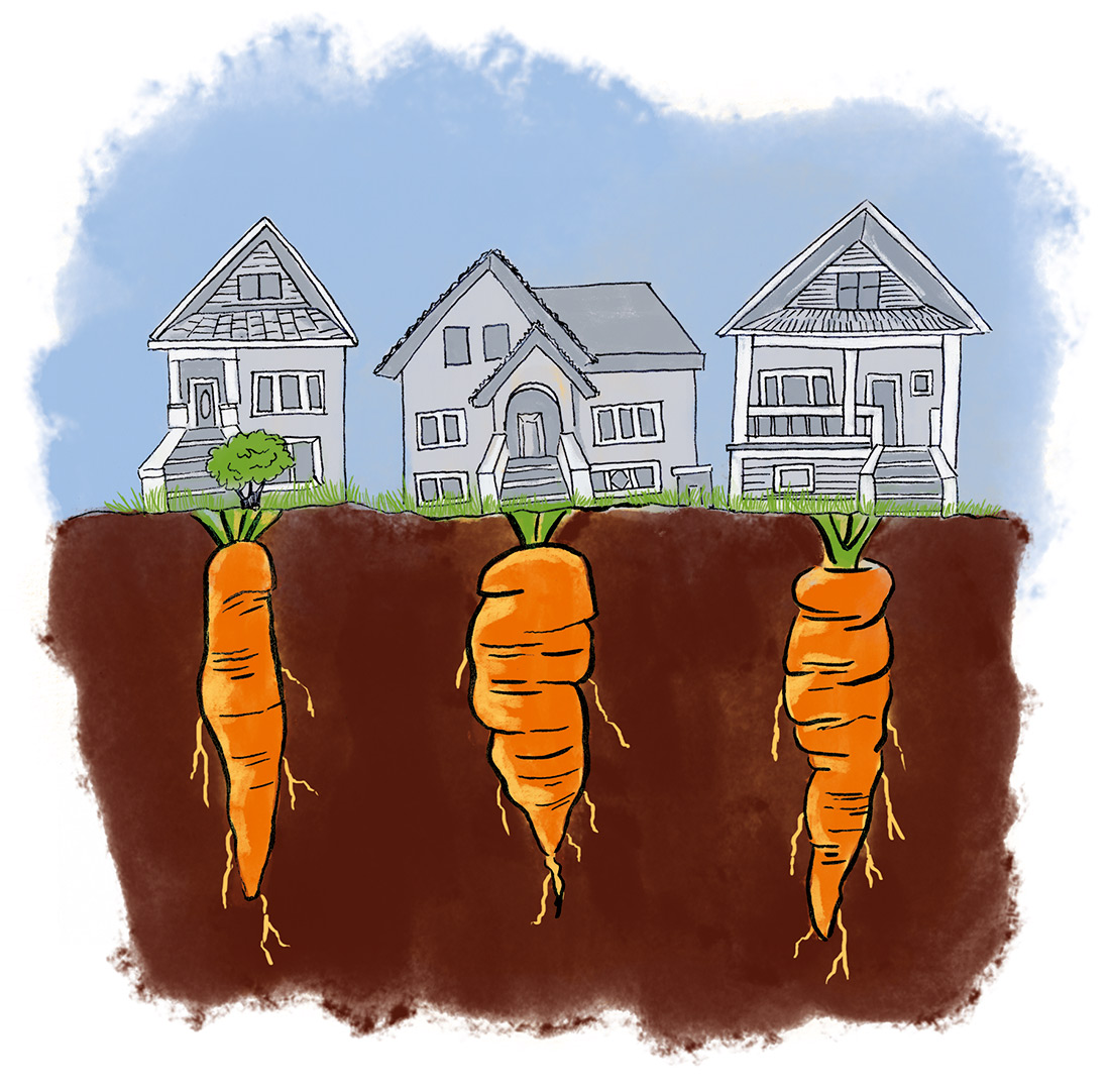 Capilano-Courier-editorial-spot-illustration-Urban-Farming-by-Fiona-Dunnett.jpg