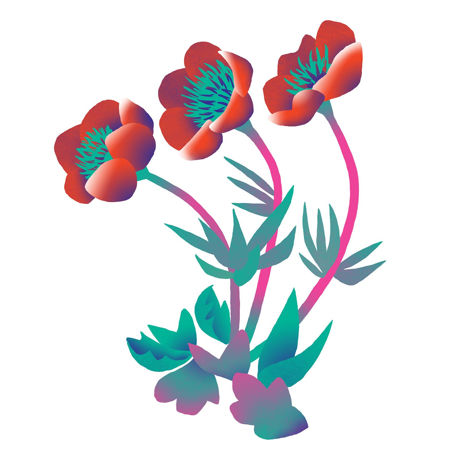 poppies-biomimicry-digital-illustration-by-Fiona-Dunnett.jpg