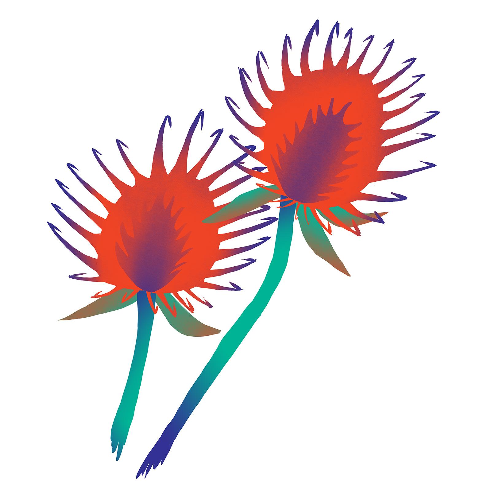 burr-biomimicry-digital-illustration-by-Fiona-Dunnett.jpg