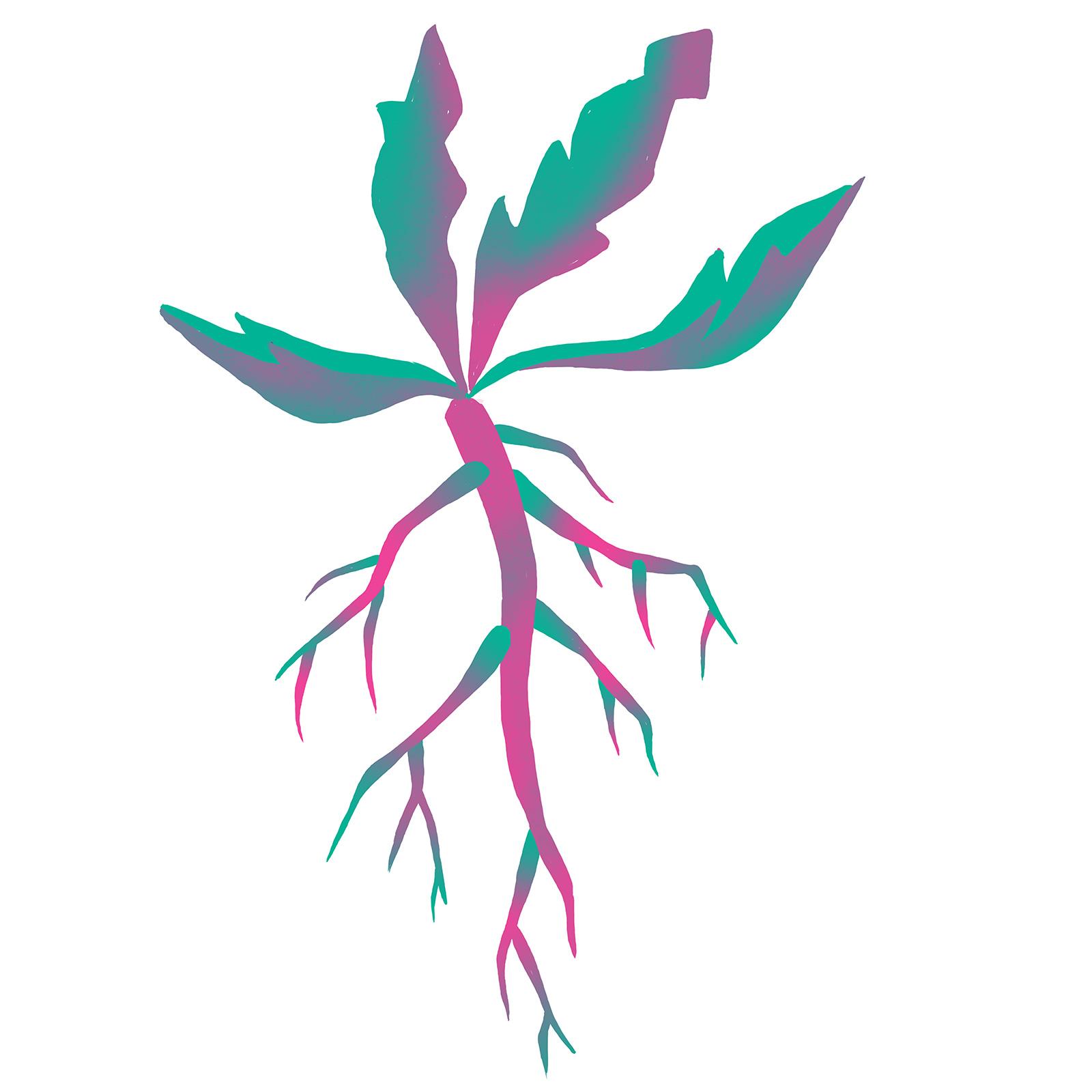 taproot-biomimicry-digital-illustration-by-Fiona-Dunnett.jpg