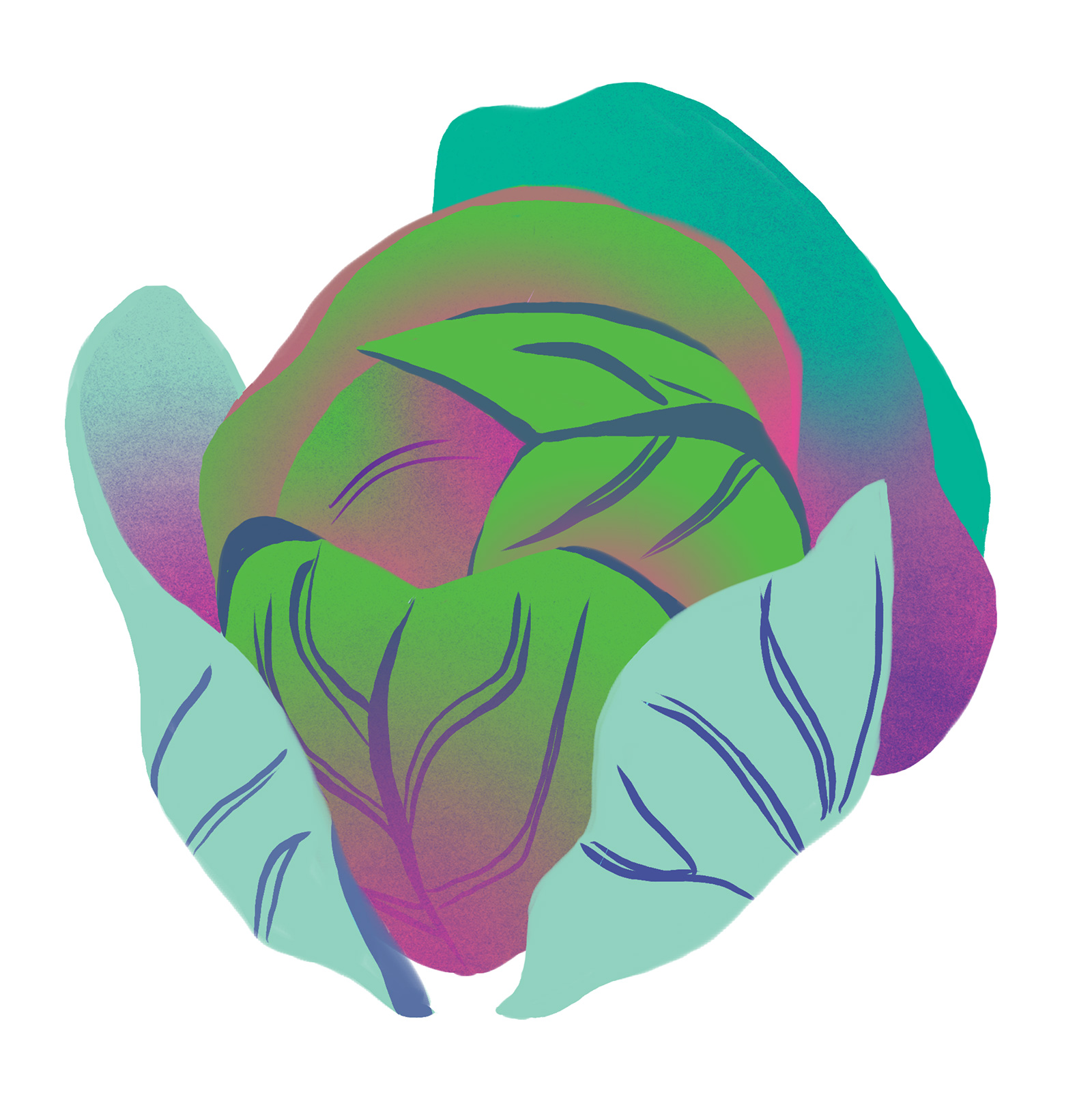 cabbage-biomimicry-digital-illustration-by-Fiona-Dunnett.jpg