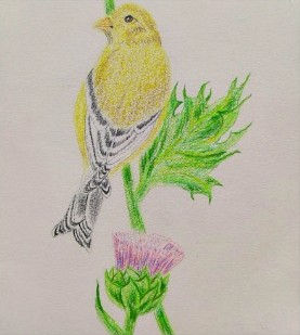Bird and Thistle.jpg