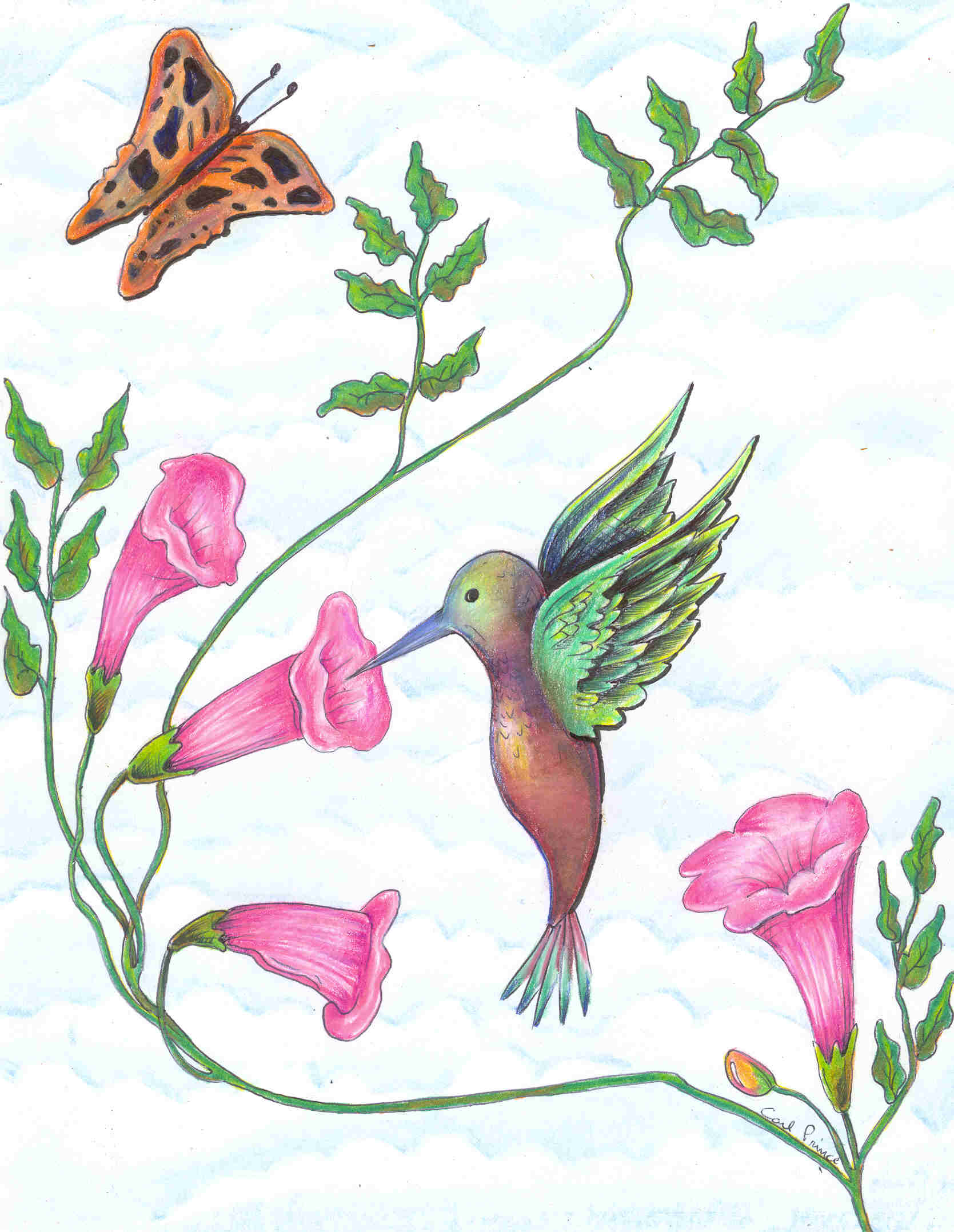 carlshummingbird.jpg