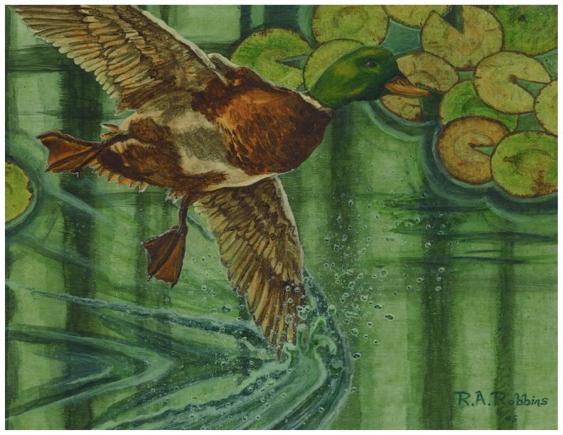 Duck Painting.JPG