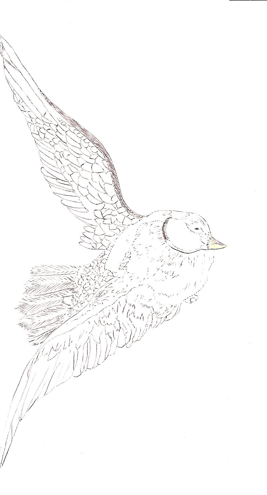Karl's birds 1 001.jpg