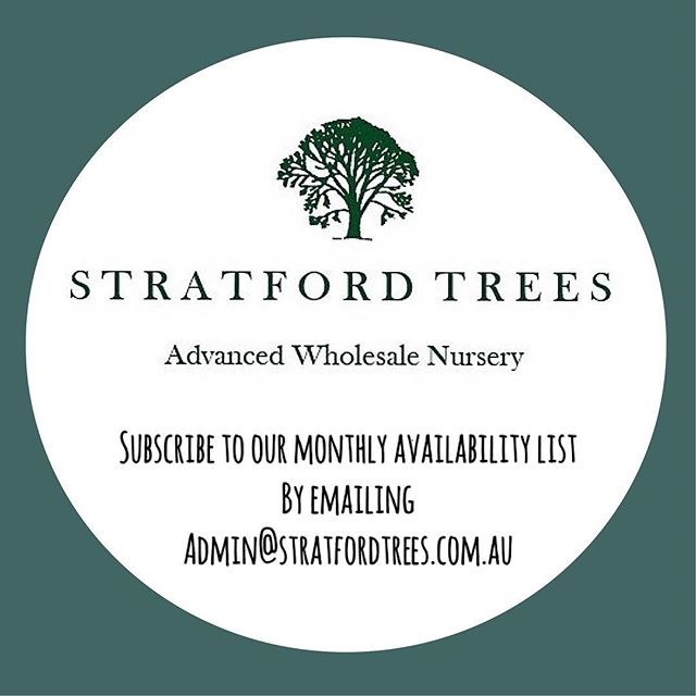 Subscribe to receive our monthly availability list by emailing your request to admin@stratfordtrees.com.au. ⠀ If you require a wholesale list please provide your business details (name and ABN) in the email. ⠀ ⠀ #stratfordtreesnursery #deciduous #ornamental #native #trees #wholesalenursery #plants