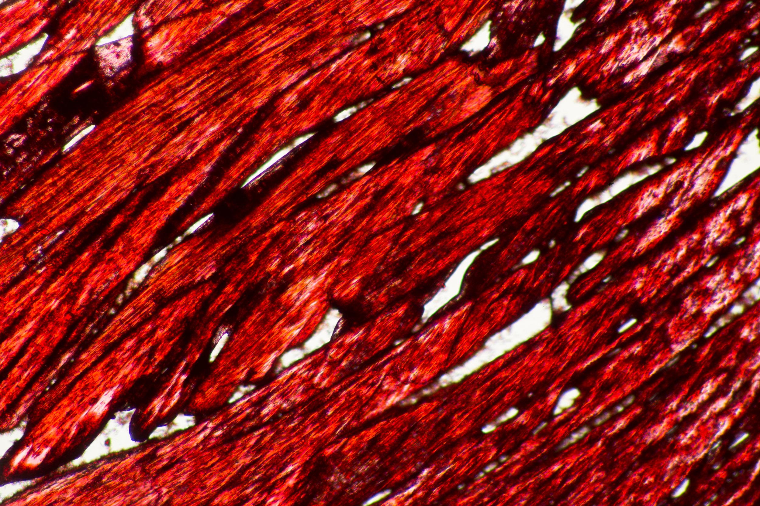 Microscopy_8.jpg